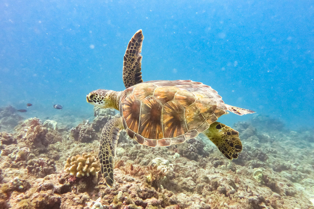 ocean-life-6288.jpg