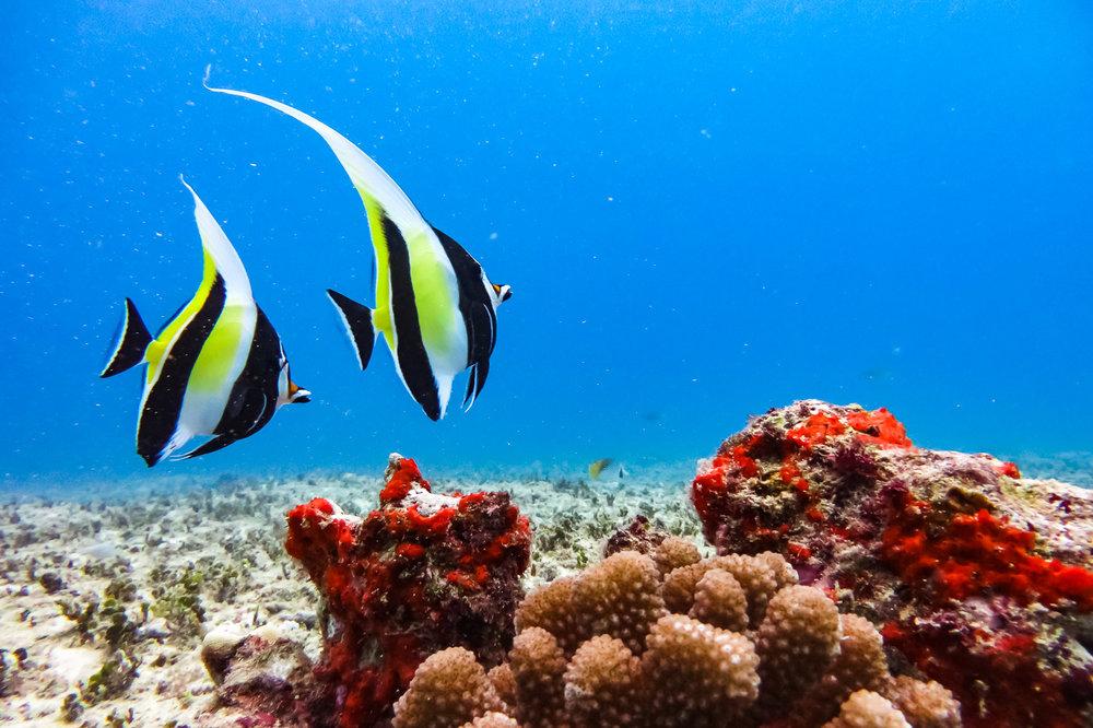 ocean-life-6363.jpg