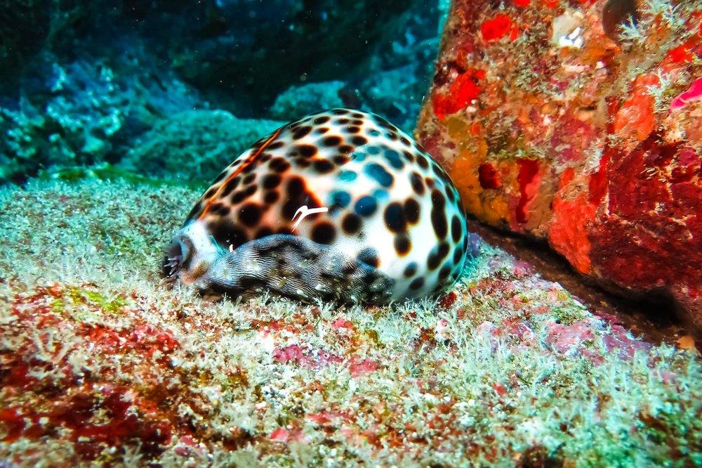 ocean-life-6520.jpg