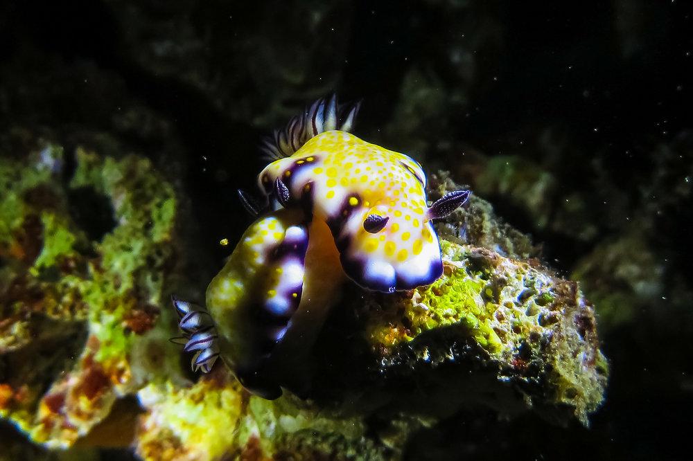 ocean-life-8383.jpg