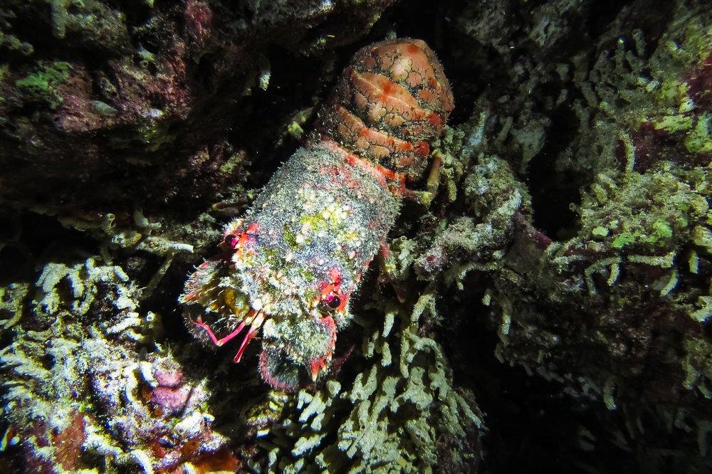 ocean-life-8402.jpg