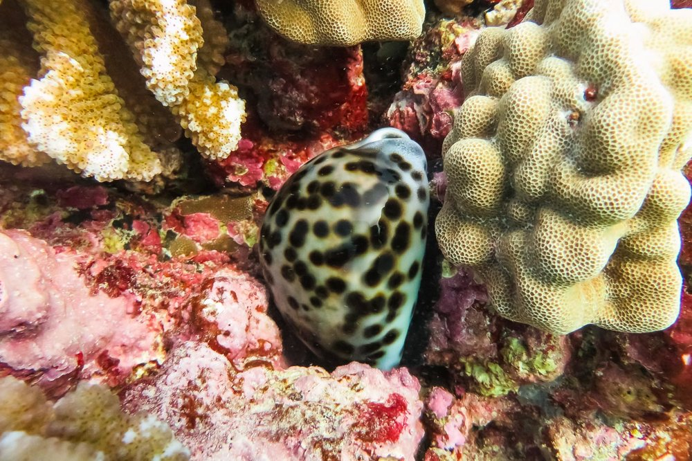 ocean-life-9226.jpg