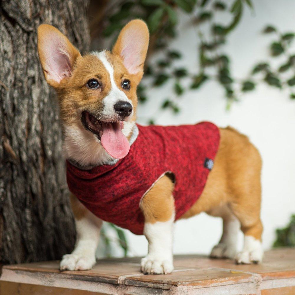 Ethical Dog Clothing