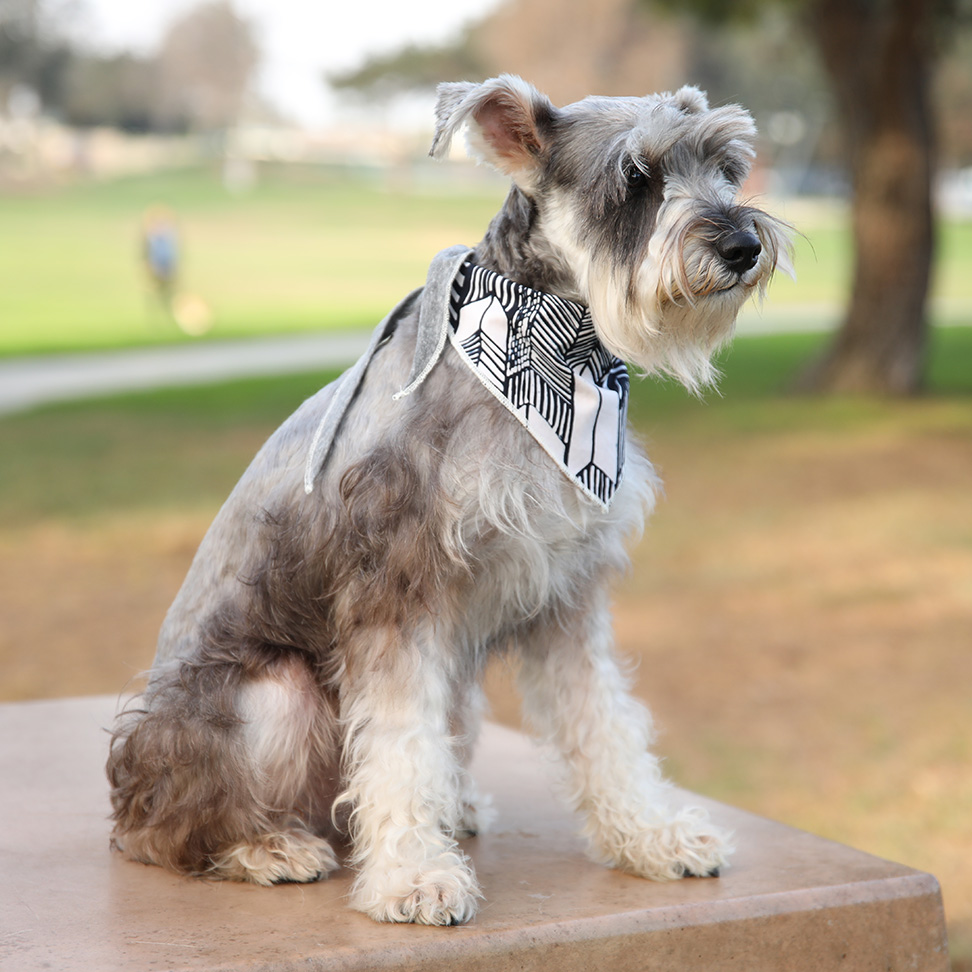 Ethical Dog Clothes