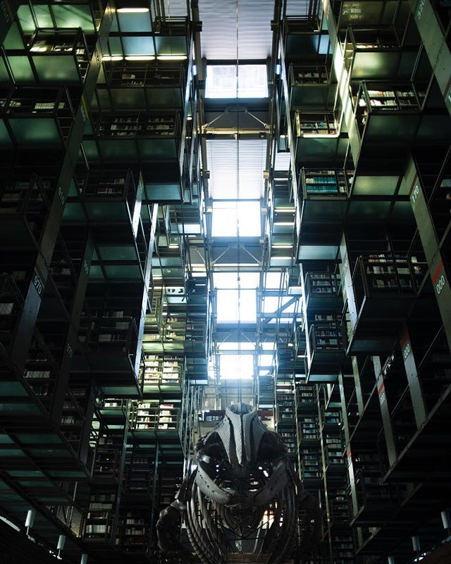 """I have always imagined that paradise will be a kind of library"" - jorge luis borges ———————————— This beautiful #library gives pause for #reflection.  Always loved libraries, they always have a way of calming me down, a sanctuary in the crazy world.  Let your mind wander somewhere else.  In awe, underneath a whale skeleton.  P.s 🤫"