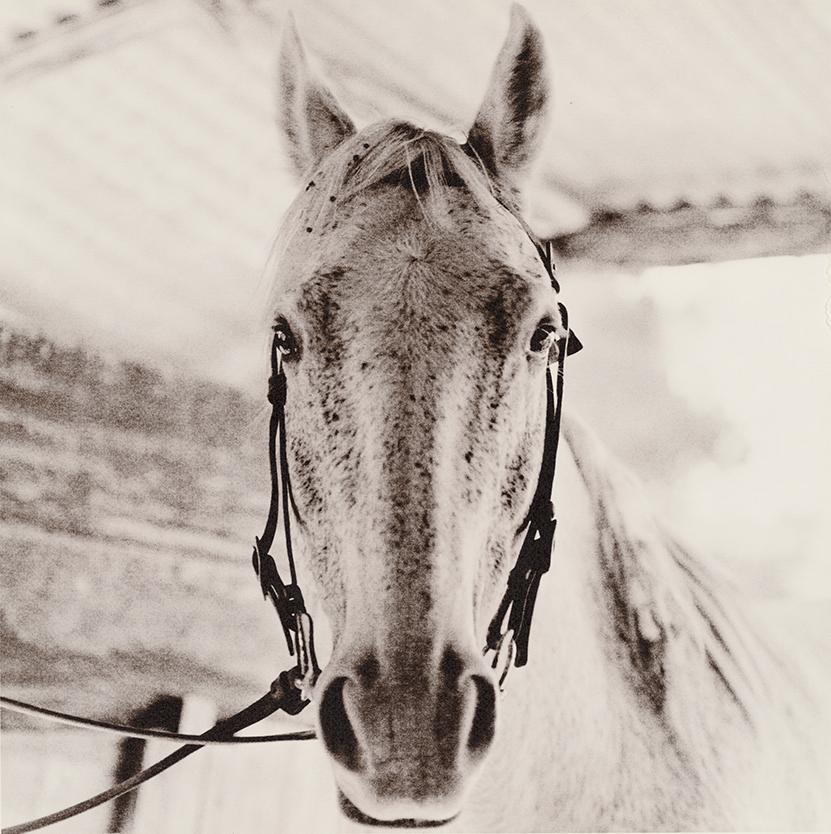 Horse portrait NSW.SLR.ED.jpg