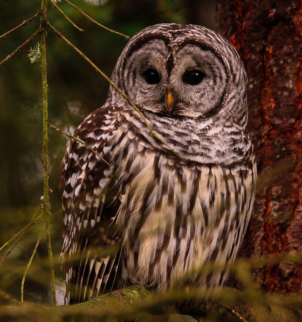 IMG_8273-Owl.jpg
