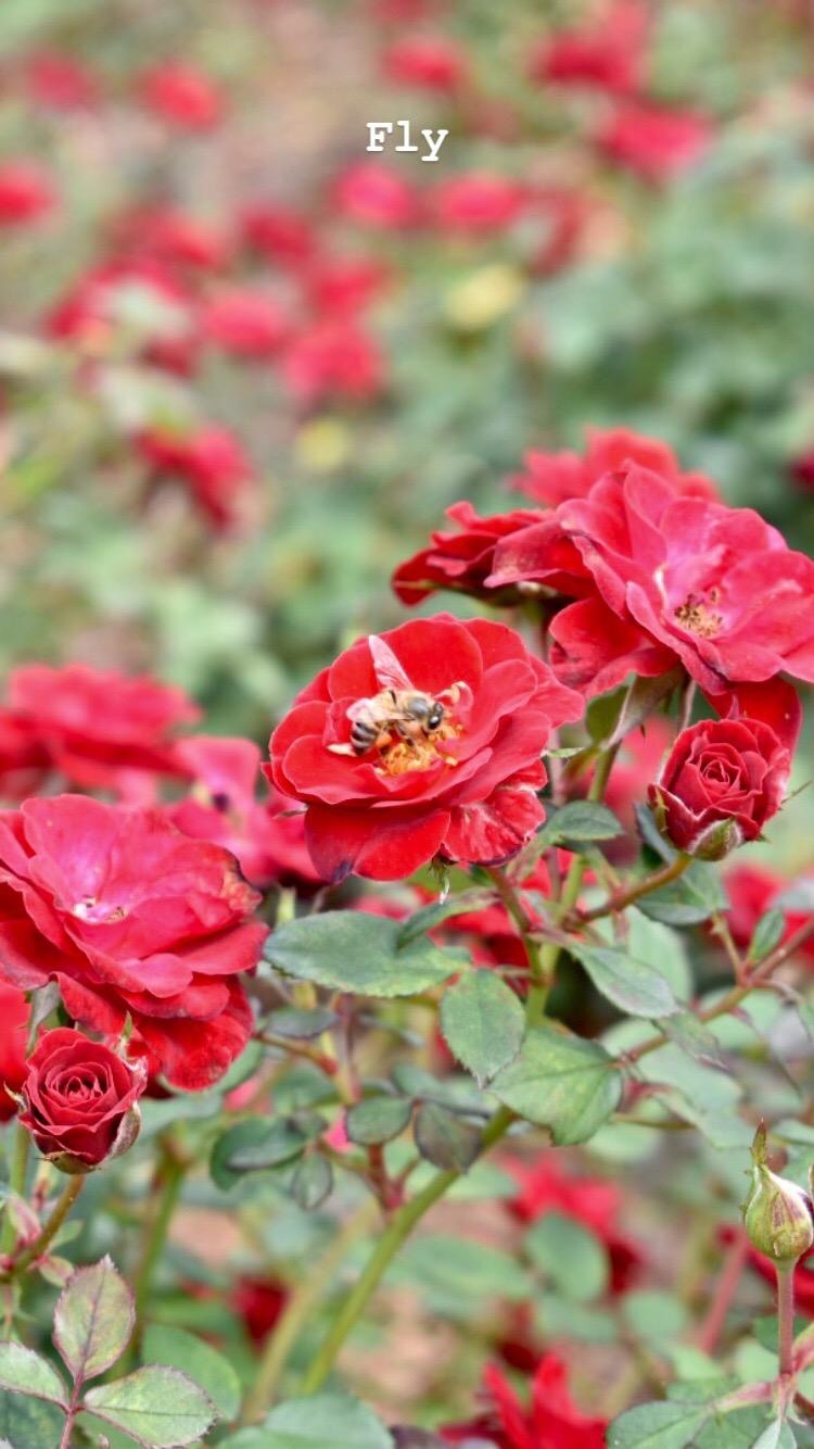 Leu Gardens Orlando Things to Do (3).jpg