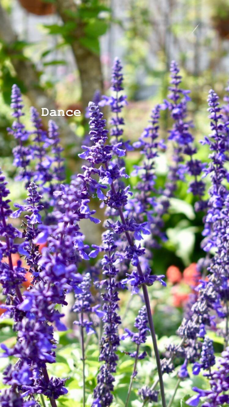 Leu Gardens Orlando Things to Do (6).jpg