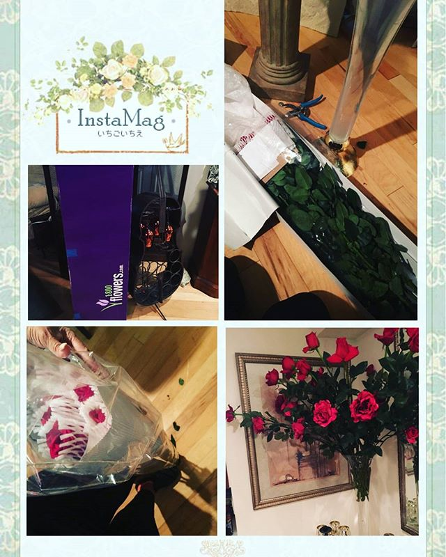 Found the perfect spot to place my roses  #Thankyou for the lovely #valentines #bouquet 🌸🌷💐🌺🌼🌹🌷😱 #speechless #amazing #instagood #3ft #beautiful #blossom #FreedomRoses #1800flowers #BrookeStJames #cozycourtesan #naüghtybutnice #nyebony