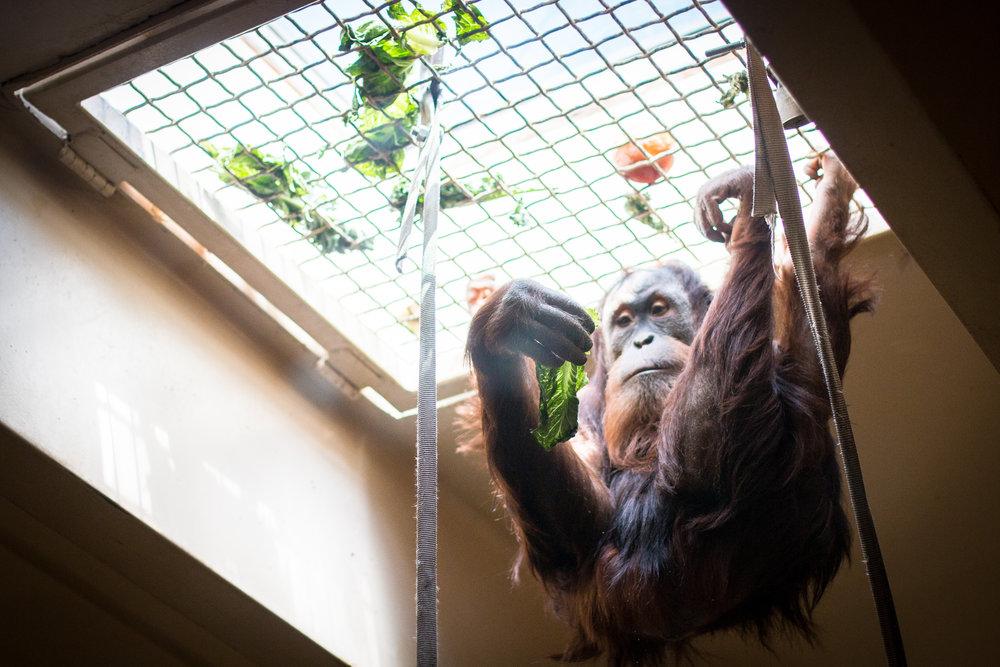 Zoo-92.jpg