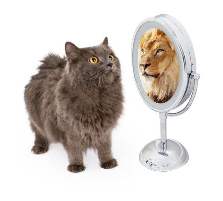 Cat and Lion image.jpg