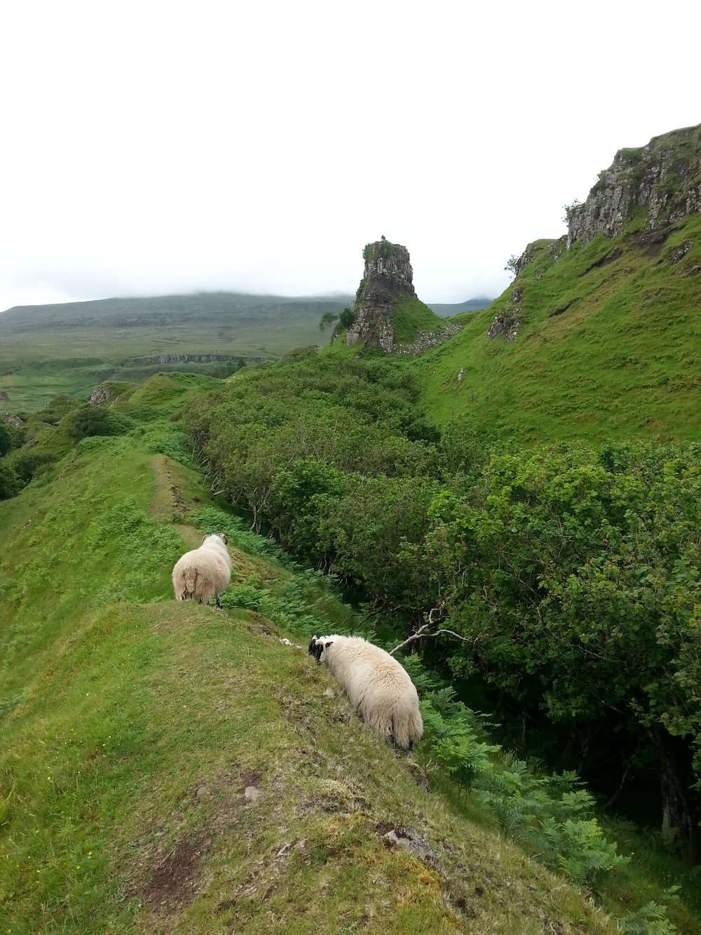Following a sheep trail through the Fairy Hills, Isle of Skye, Scotland.