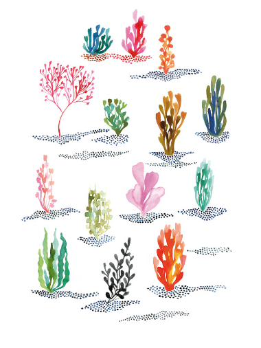We're loving the corals in this Algae Illustration by Miss Capricho