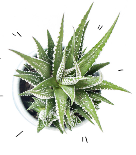 Secrets of Green cactus.png