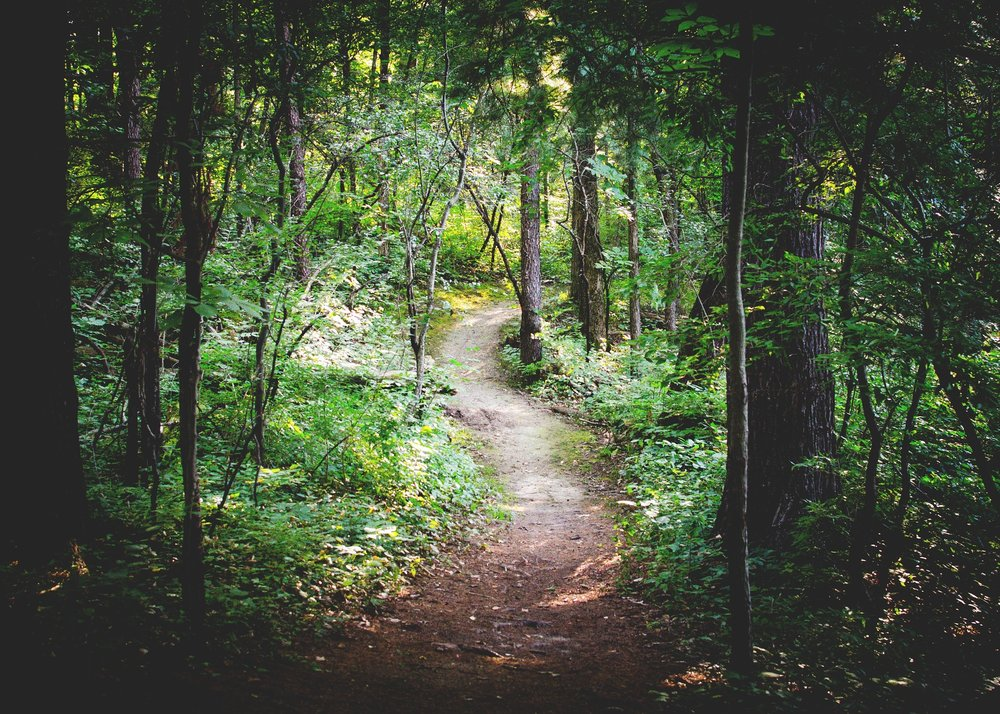 Forest path cf.jpg