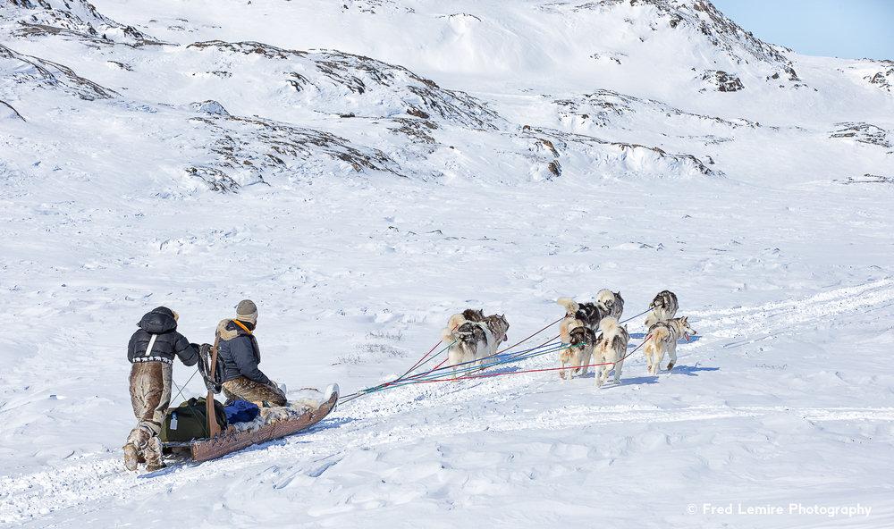 Dog team 2
