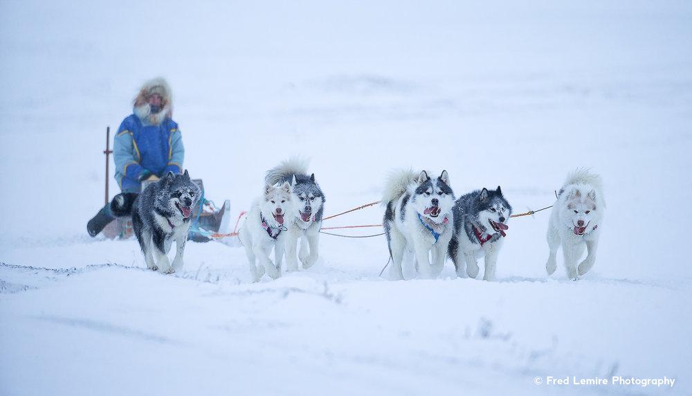 Dog team 11