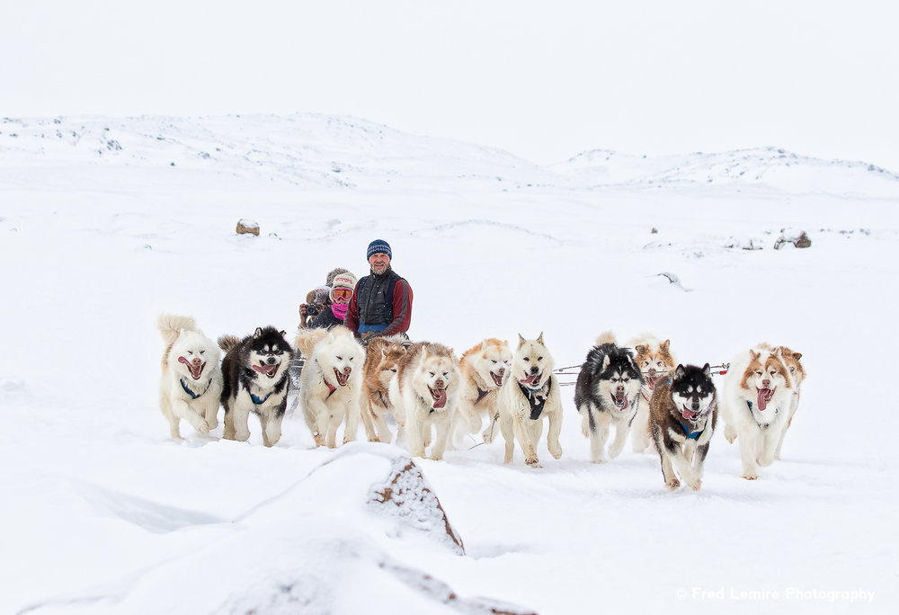 Dog team 12