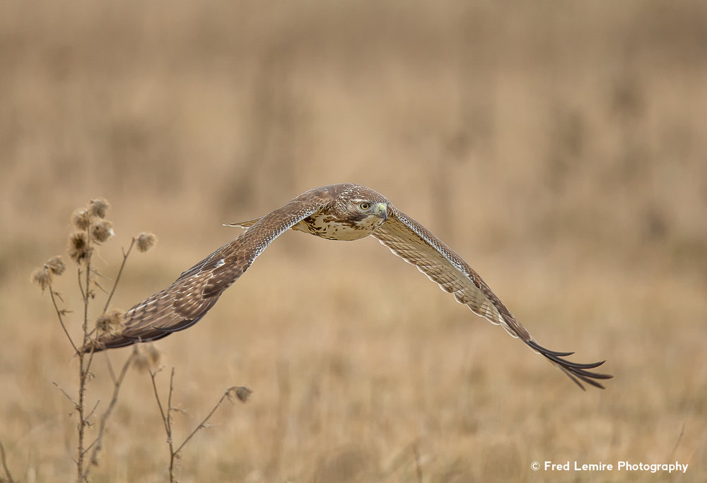 Raptors 19