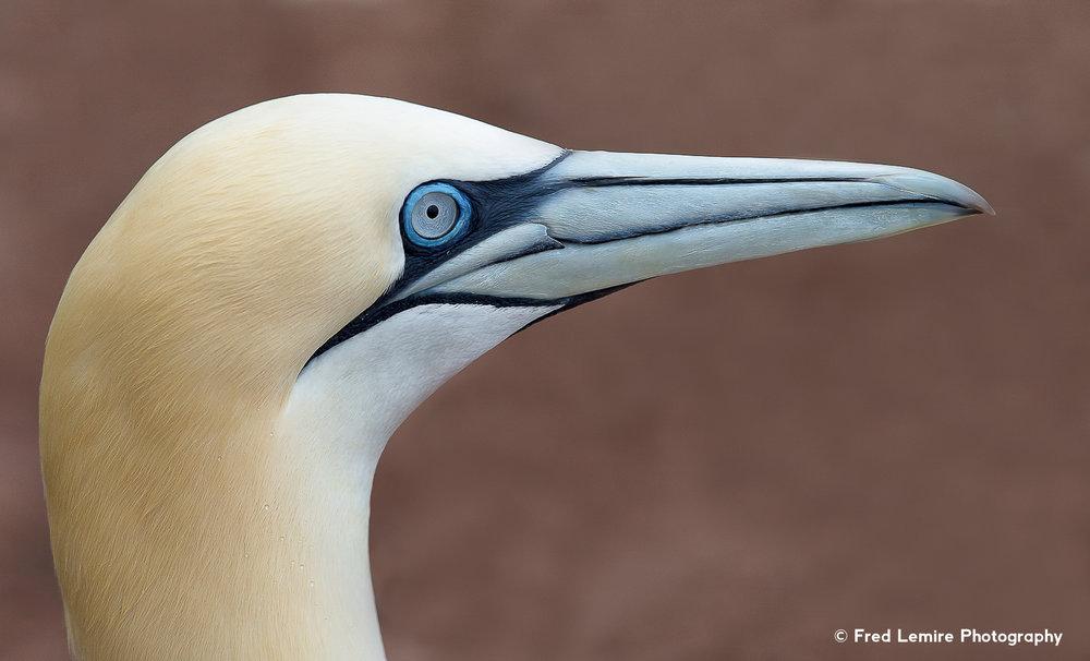 Sea birds 2