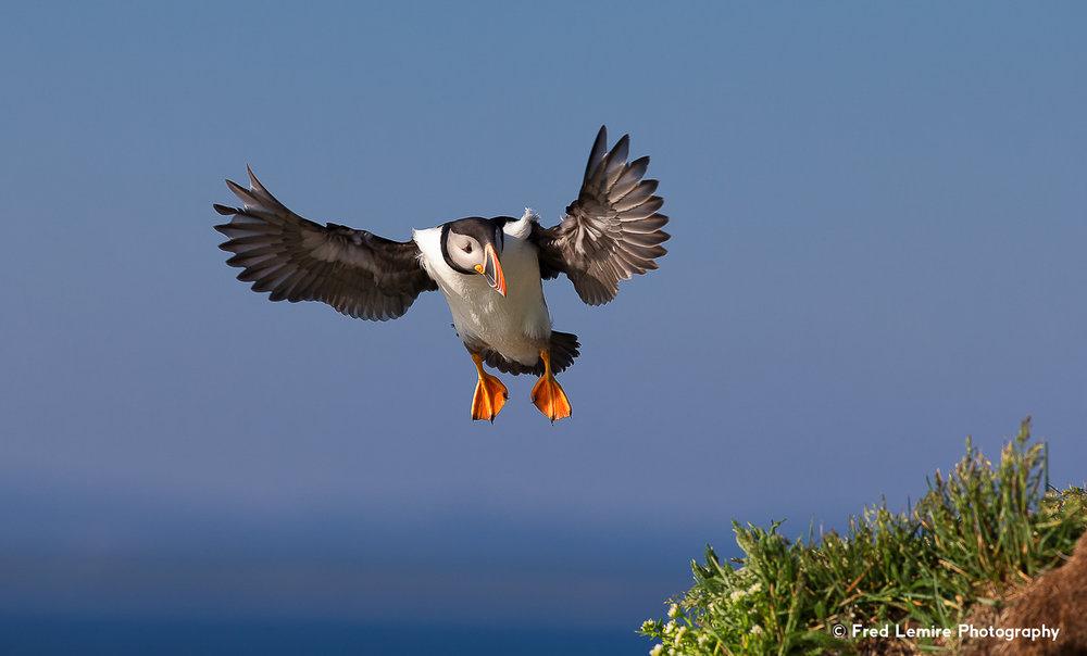 Sea birds 8