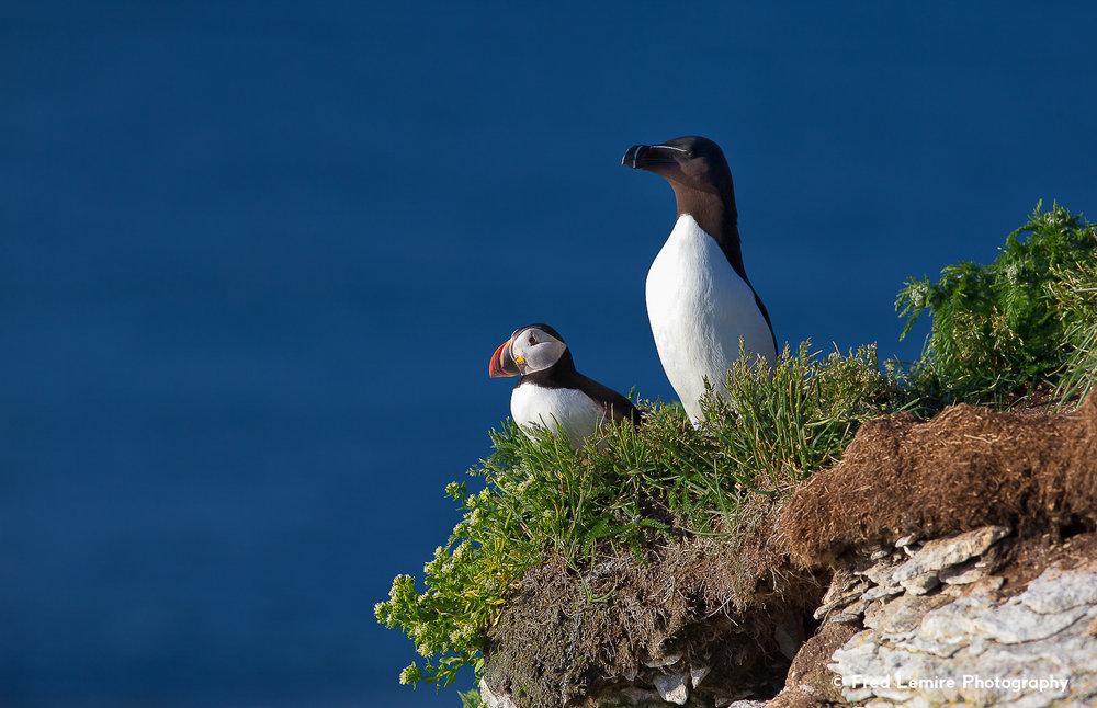 Sea birds 10