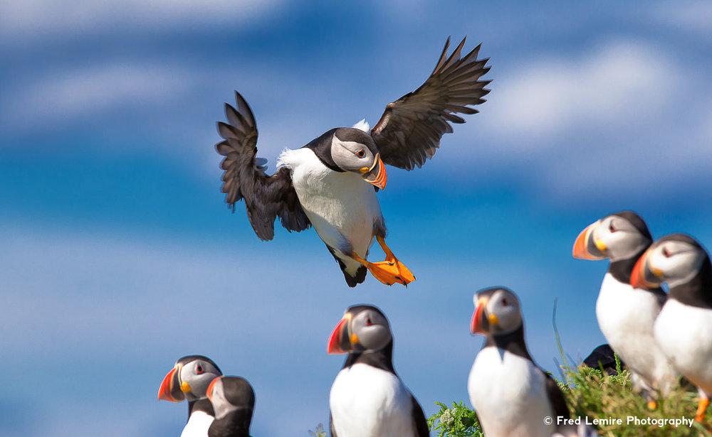 Sea birds 16