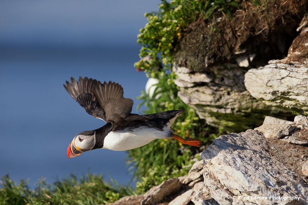 Sea birds 18