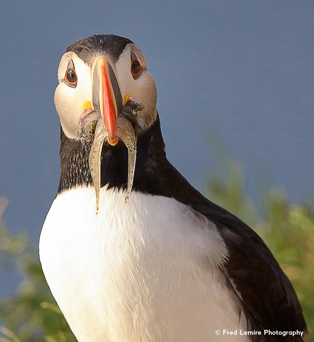Sea birds 21