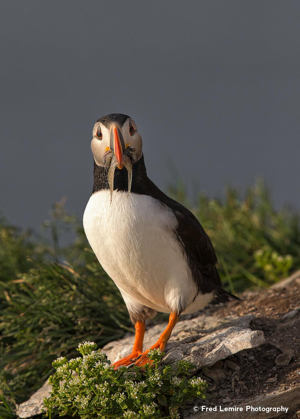 Sea birds 22