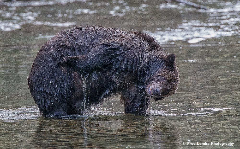 Bears 15