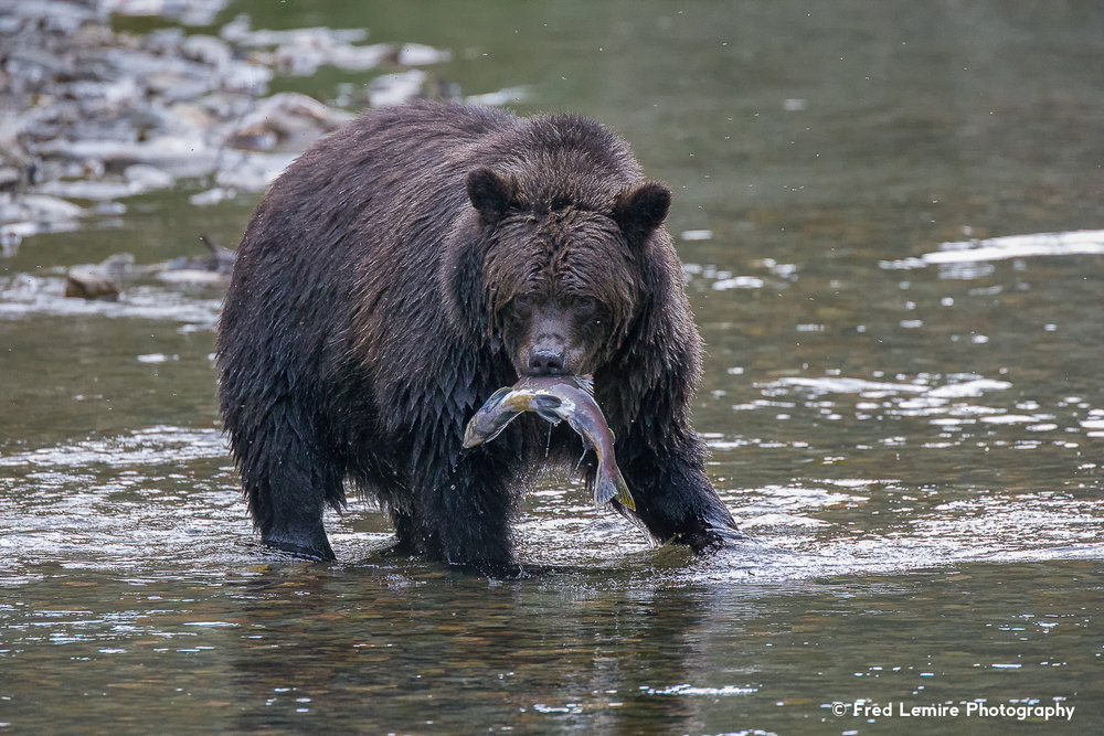 Bears 16