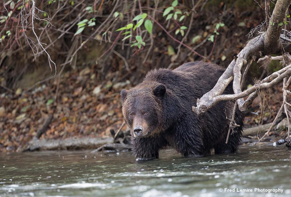 Bears 19