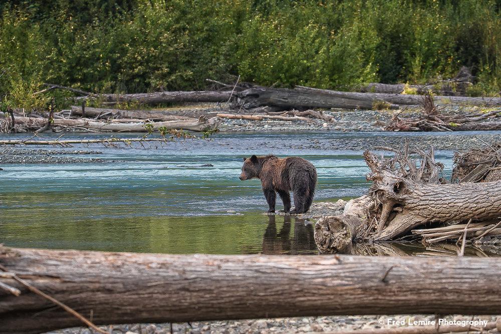 Bears 22