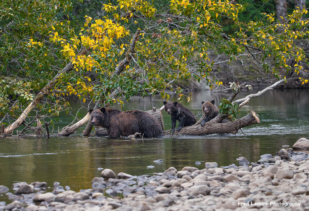 Bears 23