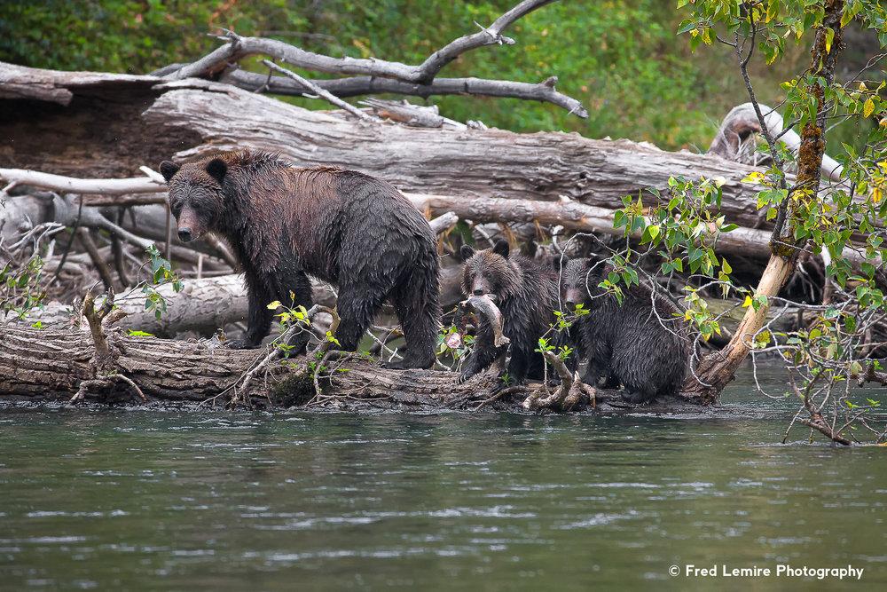 Bears 25