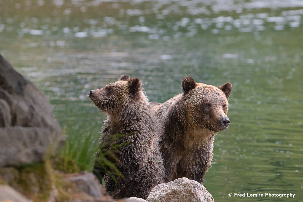 Bears 27