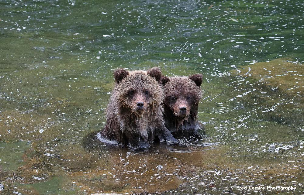 Bears 28