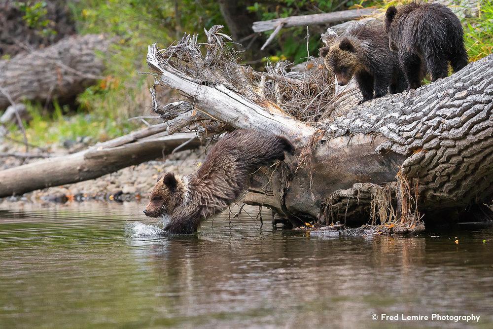 Bears 29