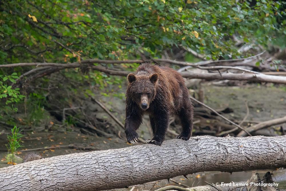 Bears 30