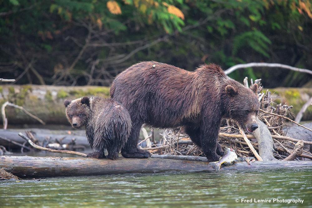 Bears 31