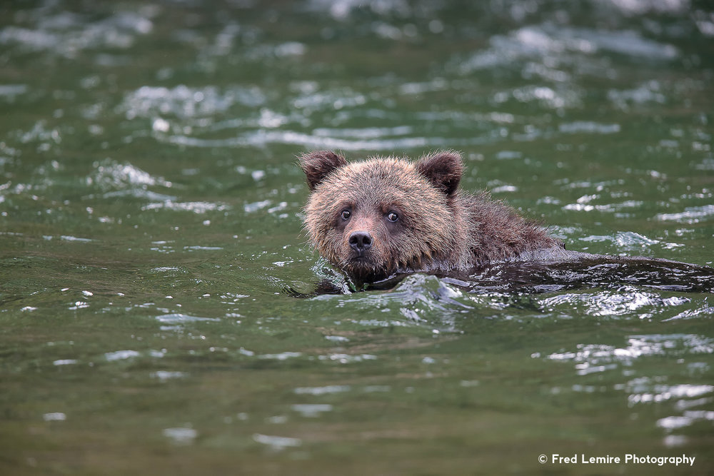 Bears 32