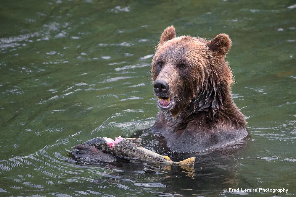 Bears 34