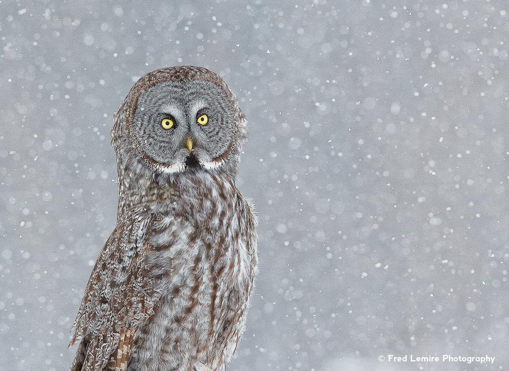 Owls 5