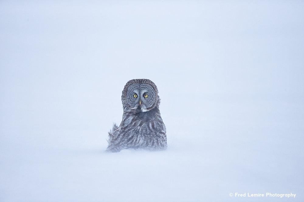 Owls 10
