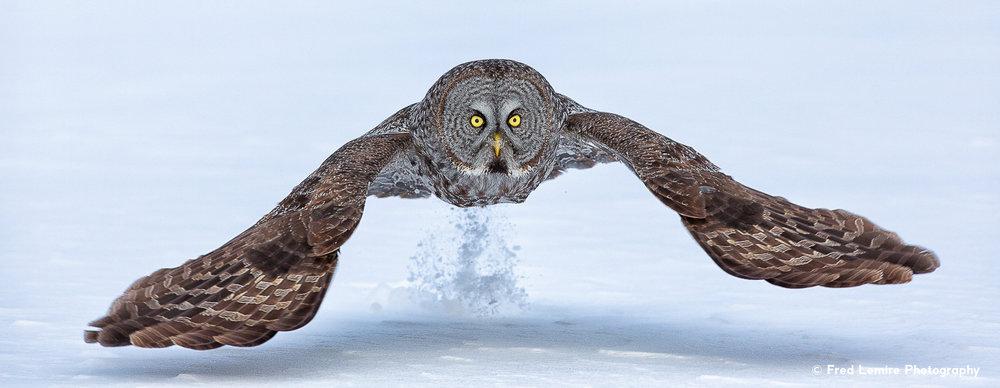 Owls 11