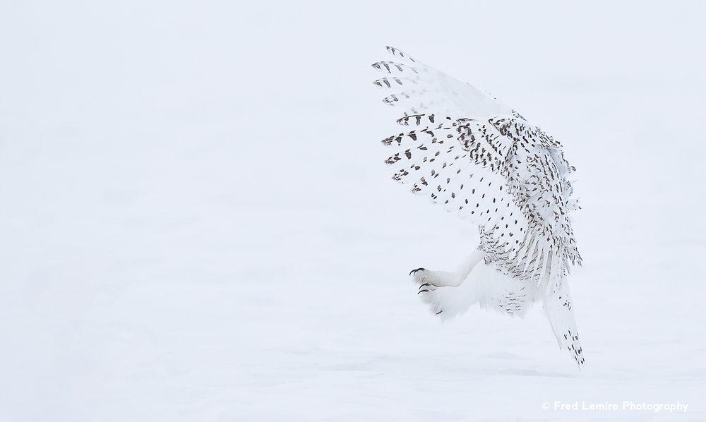 Owls 14