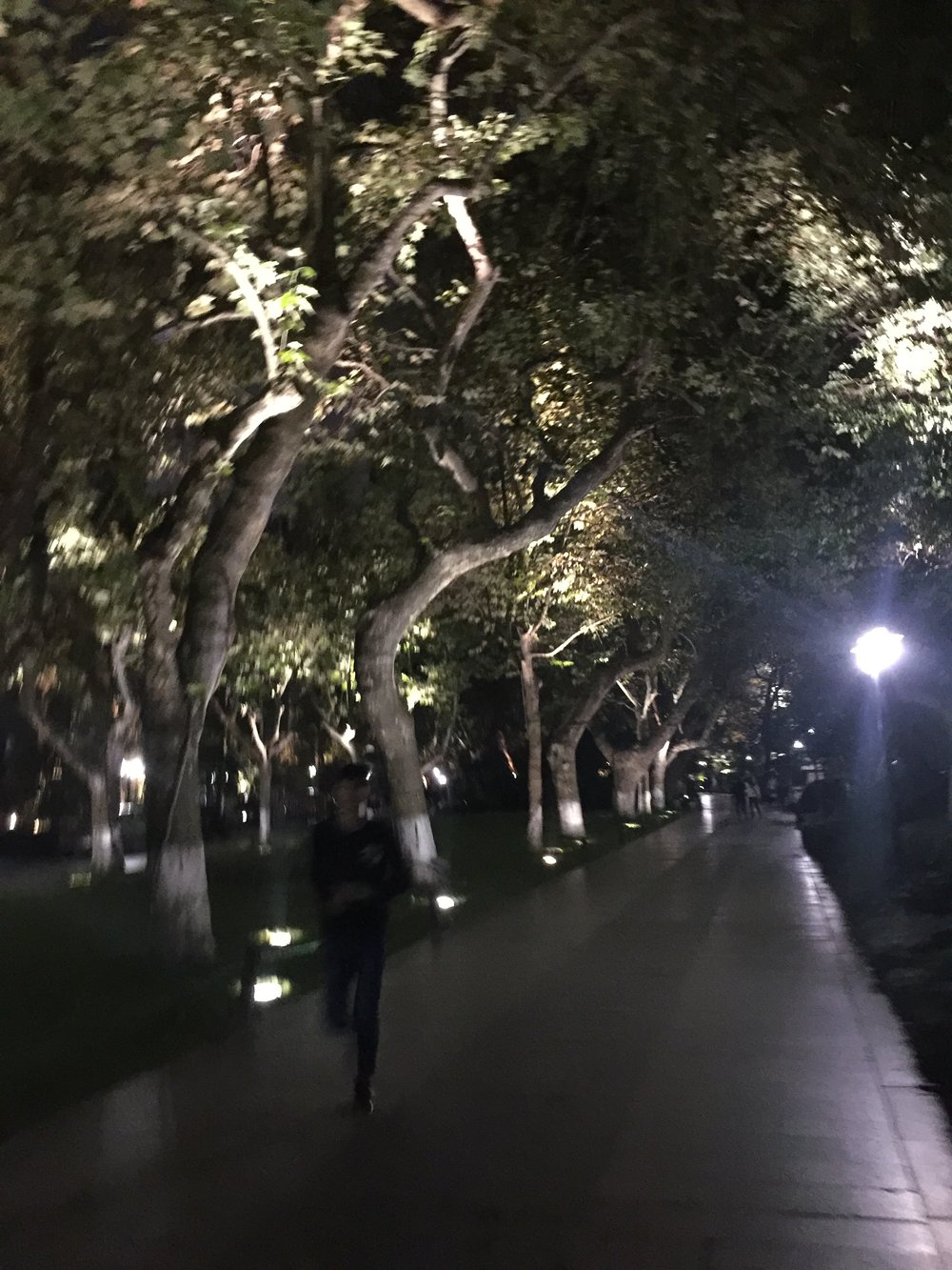 Tree lined streets at dusk