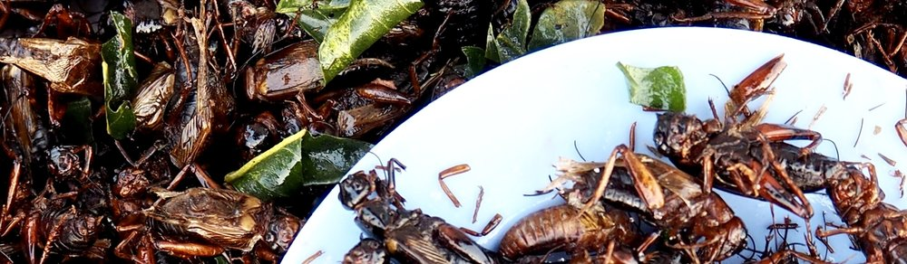 insects-food